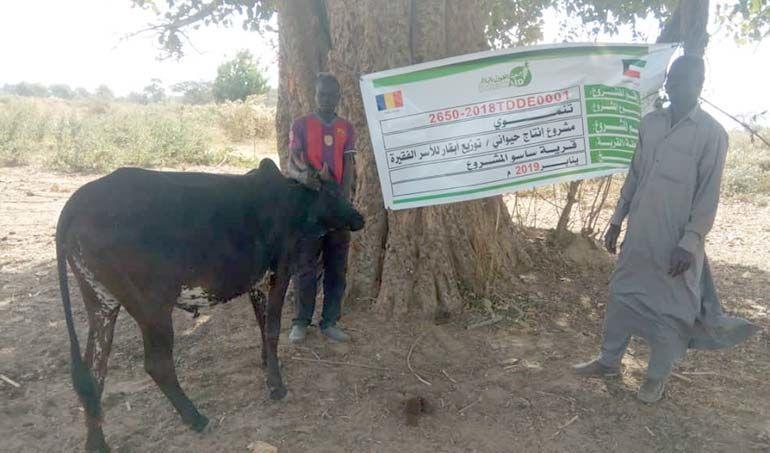 Directaid مشاريع التنمية project animal production cows-21 6