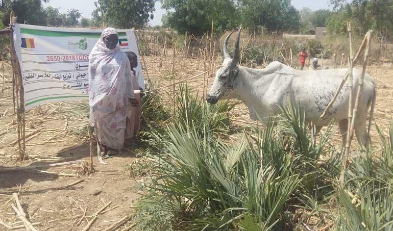 Directaid مشاريع التنمية project animal production cows-21 8