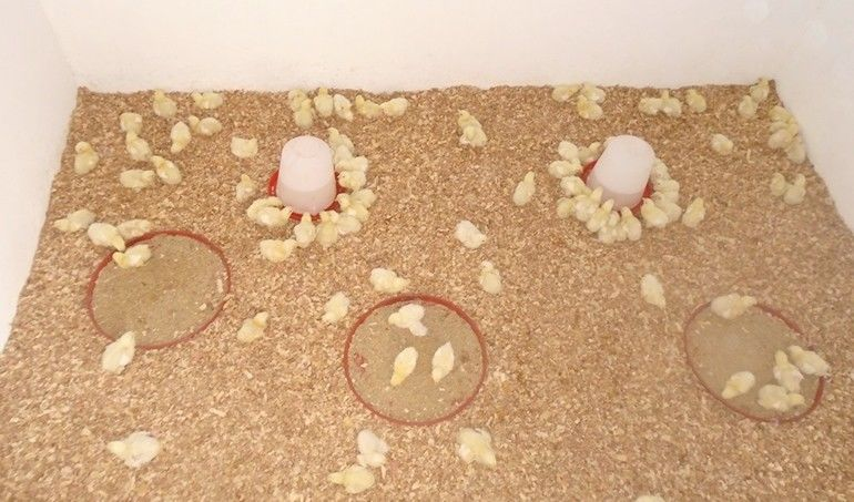Directaid مشاريع التنمية Animal Production - Poultry - Senegal - 1 1