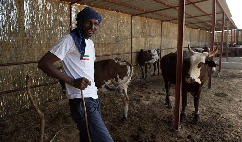 Directaid  Al-Rezeq Farm for Raising Cows 1
