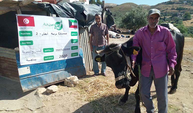 Directaid مشاريع التنمية Raising Cows 2