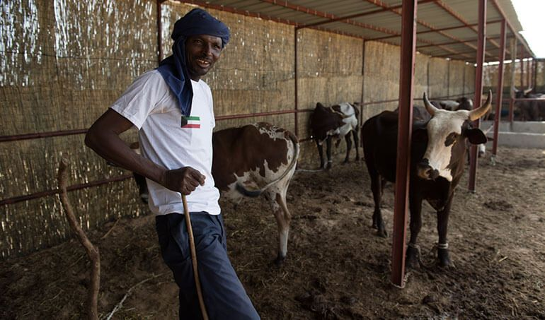 Directaid  Bashaer Alkheir - Animal Production Project - Cows1 1