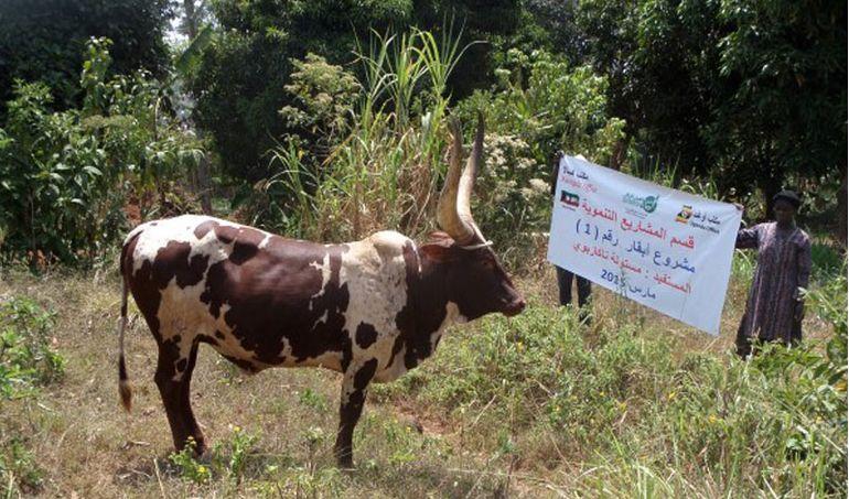 Directaid مشاريع التنمية project-animal-production-cows-2 1